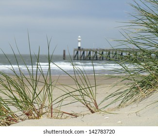 Marram Grass growing on a sand dune with a lighthouse at the entrance to Blankenberge harbour, Belgium in the background.