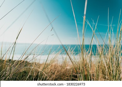 Marram grass obscures the view over the St Ives bay on a summers day in Cornwall, England