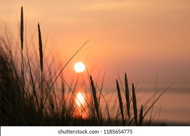 Marram grass and a setting sun in the dunes of Ouddorp, Goeree Overflakkee, The Netherlands.