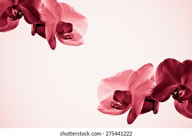 Marsala pale red orchid flowers composition on pale homogeneous background