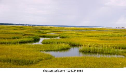Marsh in Cape Cod, Massachusetts