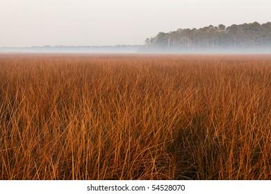 Marsh in fog 2