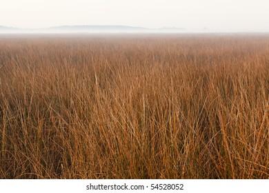 marsh in fog