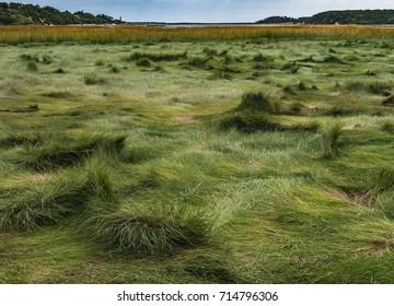 Marsh Grass on Great Island, Late Summer, Cape Cod National Seashore