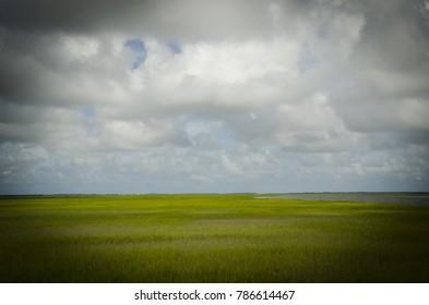 Marsh Grass in Summer