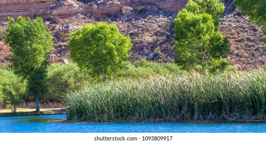 Marsh grasses and tall Cottonwood trees beside the water in Dead Horse Ranch State Park near Cottonwood, Arizona