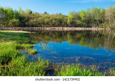 marsh grasses and woodlands surrounding pond with reflections in salem hills park inver grove heights minnesota