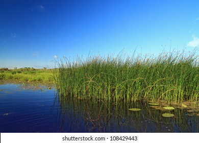 marsh herb