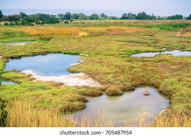 Marsh Landscape, Shoreline Park, Mountain View, California