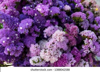 Marsh Rosemary, Sea Lavender or Statice flower background. (Scientific name - Limonium sinuatum)
