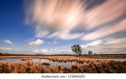 Marsh at Strabrechtse Heide, protected natural landscape in the Netherlands, Noord-Brabant. Landscape with peat, forests and marshes.