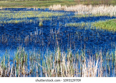 Marsh water and grasses in Alamosa National Wildlife Refuge with Blanca Mountain in the background