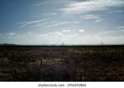 Marsh wetland with bullrushes in foreground and industrial buildings distant on the horizon