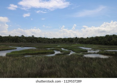 Marsh wetlands and forest