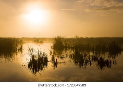 Marshes of Donana National Park in Andalusia Autonomous Community of Spain in Europe