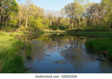marshes and forest of battle creek regional park in saint paul minnesota during lush greenery of spring