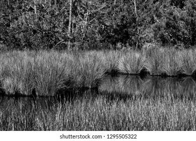 Marshland of Florida. UDSA