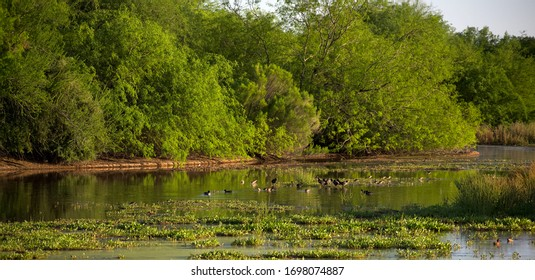 Marshland Landscape of Trees and Water Fowl