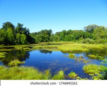 marshland at the Nisqually National Wildlife Refuge