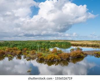 Marshland on one of artificial islands of Marker Wadden, Markermeer, Netherlands