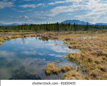 Marshland pond in boreal forest (taiga) of Yukon Territory, Canada, reflecting blue partly clouded sky.