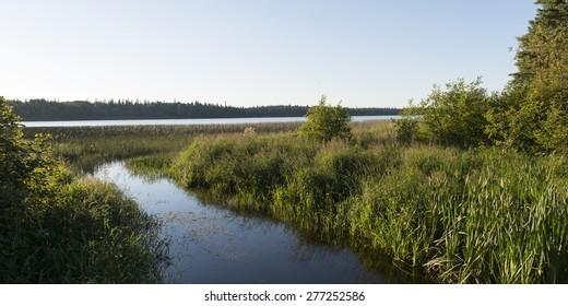 Marshland, Wasagaming, Riding Mountain National Park, Manitoba, Canada