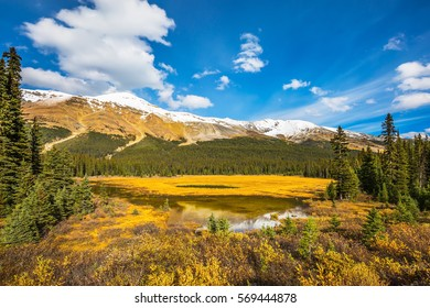 Marshy lake in the Rocky Mountains. The mountains are covered in the snow. Autumn in Canada.  The concept of ecotourism