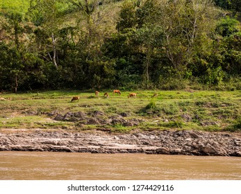 A marshy river is passing through the picture. Mountain ranges in the distance. Cows graze near the river.