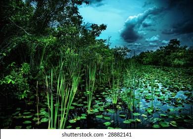 Marshy Swamp Land in Florida