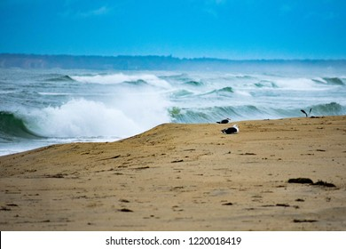 Martha's vineyard ocean scenes