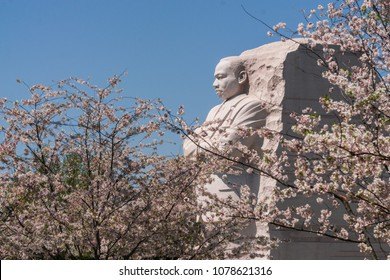 Martin Luther King Memorial Cherry Blossoms