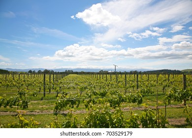Martinborough Vineyards, New Zealand