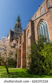 The Martini tower with blossoming tree in Groningen, the Netherlands