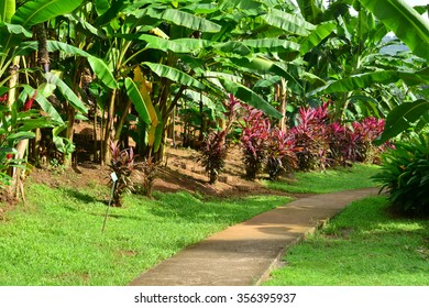 Martinique, the banana museum of Sainte Marie in West Indies
