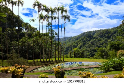 Martinique island, French West Indies-January 04,2018 : The Balata is a botanical garden located on the Route de Balata about 10 km outside of Fort-de-France, Martinique, France.