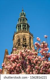 The Martinitoren in the city of Groningen, with flowers in a tree on a sunny, spring day. Groningen, Holland.