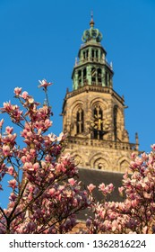 The Martinitoren in the city of Groningen, with magnolia blossom on a sunny, spring day. Groningen, Holland.