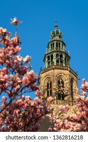 The Martinitoren in the city of Groningen, with magnolia flowers on a sunny, spring day. Groningen, Holland.
