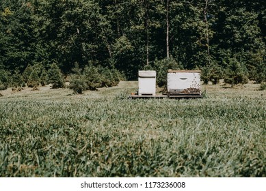 Martinsville, IN USA 09 03 2018: Bee hive box from a bee hive farm. Christmas trees in the background