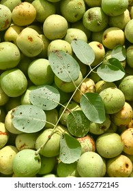Marula fruits and marula tree leaves with a few raindrops on them.