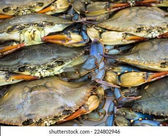 Maryland blue crabs waiting at seafood market.