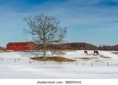 Maryland farm in Winter with Horses grazing in the snow, red barn and Elm tree