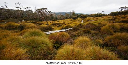 Maryland Track in Cradle Mountain, Tasmania.