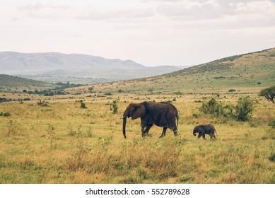 Masai Mara National Park, elephants, wildlife, Kenya, Serengeti