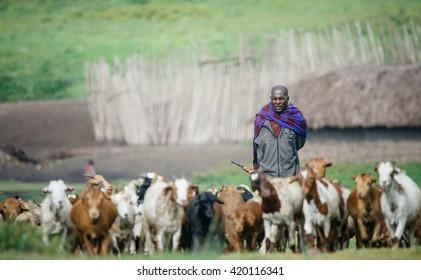 MASAI MARA - OCTOBER 02 : Young males posing in masai village on October 02 , 2013 in Masai Mara,Kenya