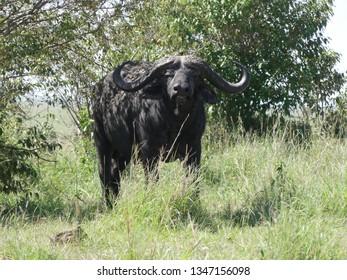 Masai Mara Wildlife