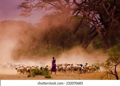 Masai shepherd in Amboseli