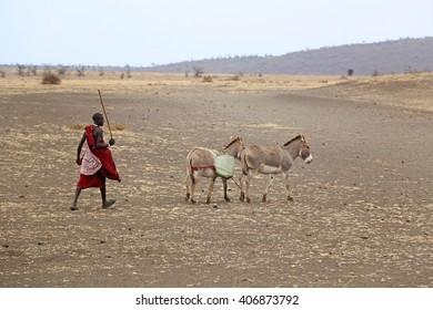 Masai Shepherd / Unidentified Masai shepherd on traditional clothing, walking with two donkeys alongside the road in Karatu, Tanzania. Photo taken on October 7, 2015.