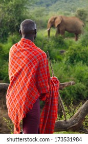 Masai Warrior looking at large elephant