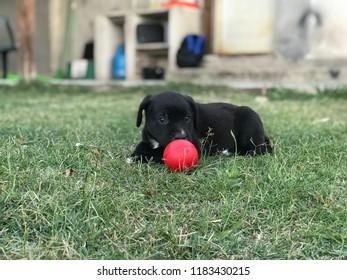 Mascota de la casa. Dog, Perro